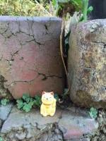 幸せの招き猫を探せ~♪