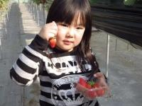 苺のおうち
